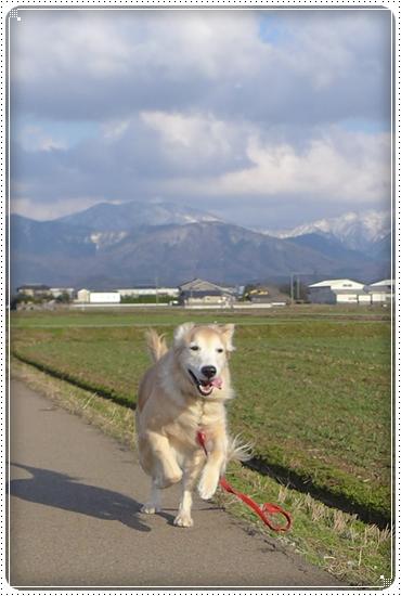 2015,3,14お散歩4