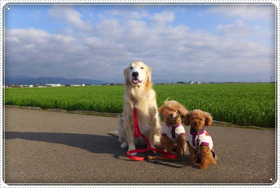 2015,4,8お散歩1