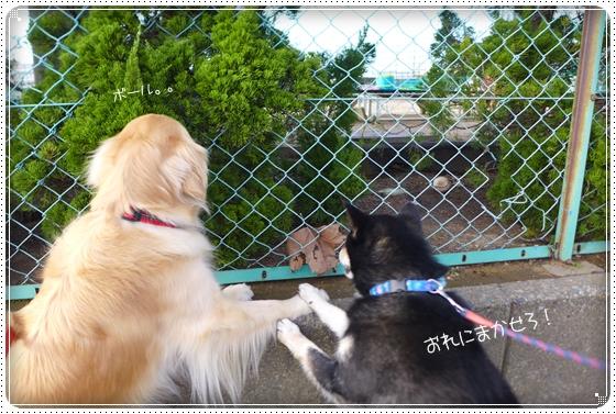 2015,4,8お散歩7
