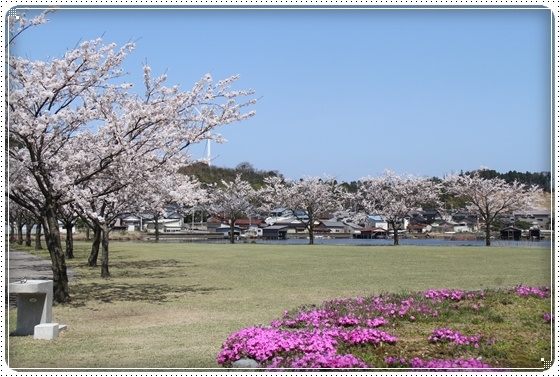 2015,4,9桜1