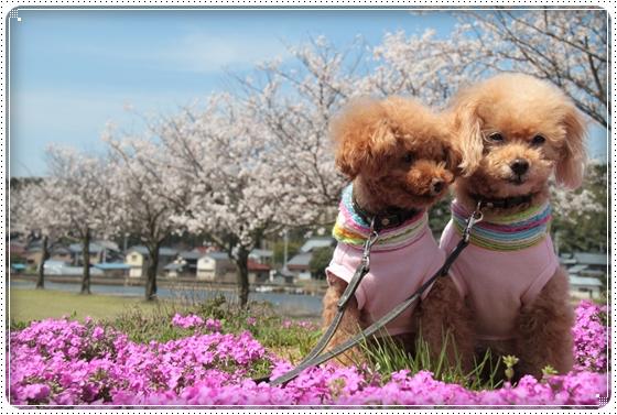 2015,4,9桜7