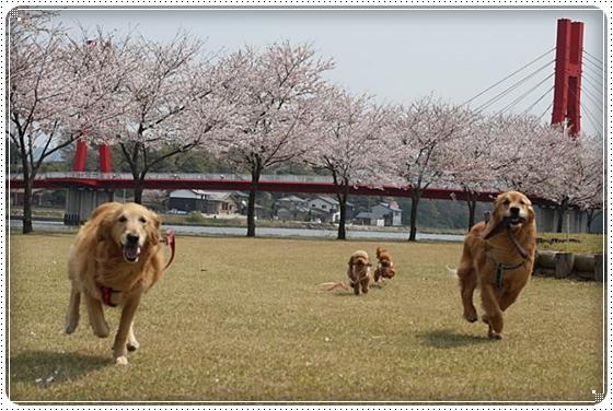 2015,4,9桜9