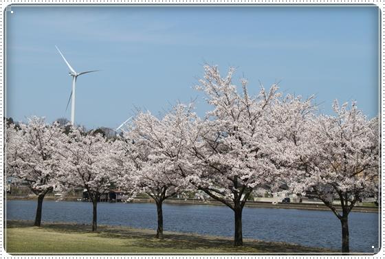 2015,4,9桜10