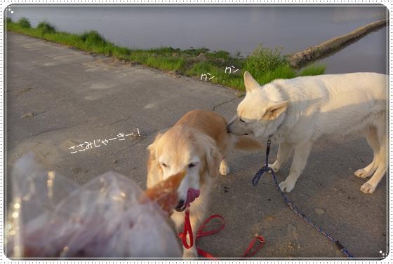 2015,5,7お散歩4