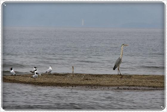 2015,5,9琵琶湖8