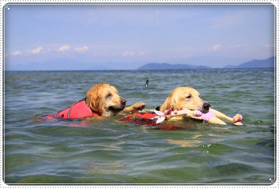 2015,5,10琵琶湖12