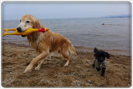 2015,5,10琵琶湖11