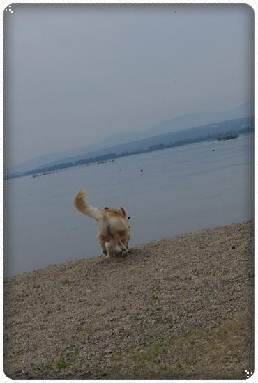 2015,5,24琵琶湖19
