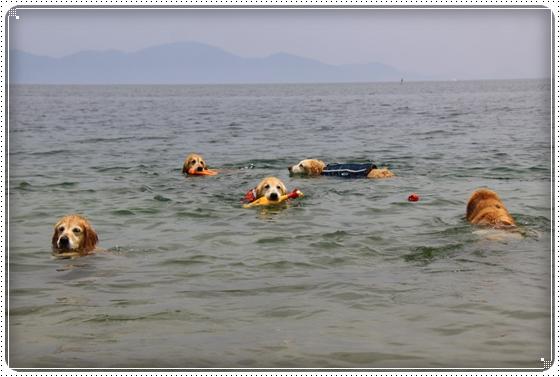 2015,6,3琵琶湖11