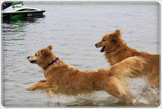2015,6,3琵琶湖8