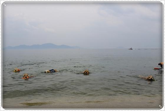 2015,6,3琵琶湖15