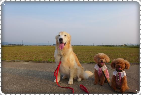 2015,6,14お散歩9