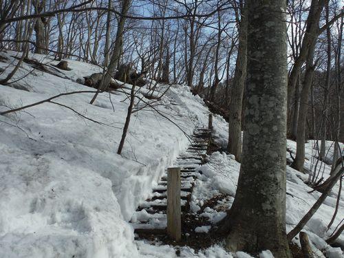 白神の森遊歩道