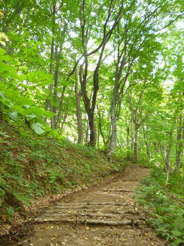 白神の森歩道