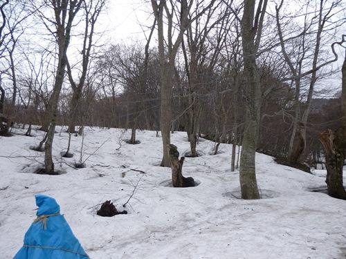 白神の森出口付近