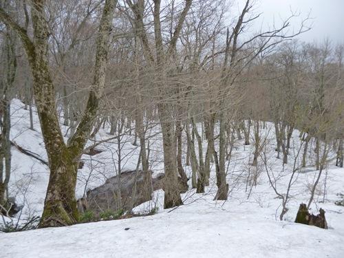 白神の森入り口付近