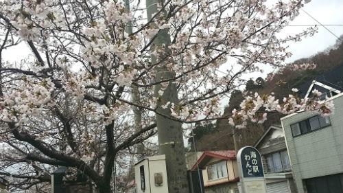 桜の木41801