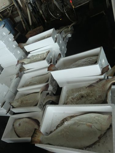 007鰺漁協ヒラメ