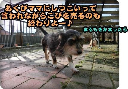 悟空アメコカカット087