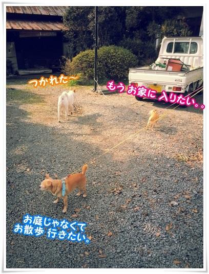 20150322_144524.jpg