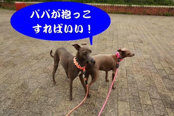 IMG_1622_convert_20150613193507.jpg