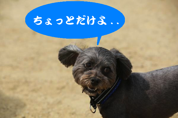 IMG_2233_convert_20150617202206.jpg