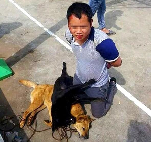 chinadog5.jpg
