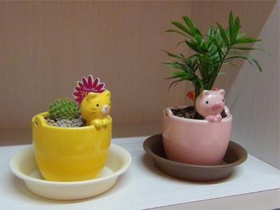 観葉植物-1