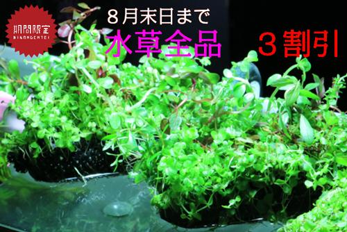 top_plant-sale.jpg