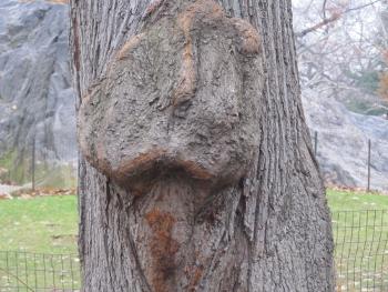動物の顔のような木