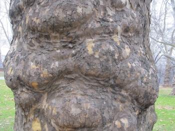 妖怪の顔のような木