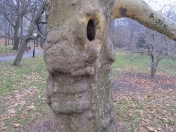 動物のように見える木