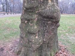 悲しそうな顔の木