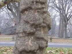 妖怪のような顔の木