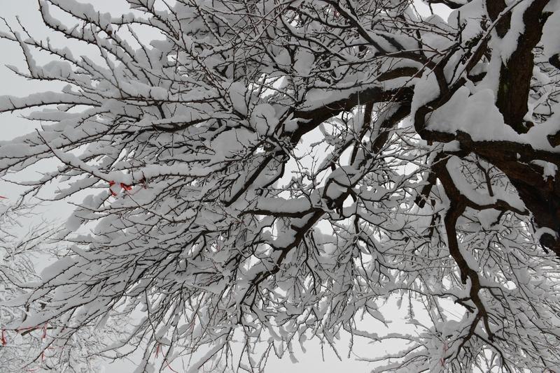 正月から雪-1
