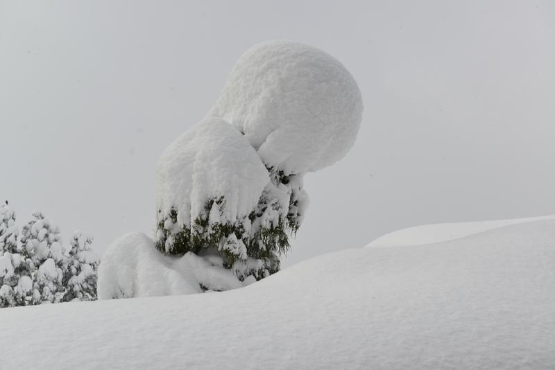 正月から雪-2