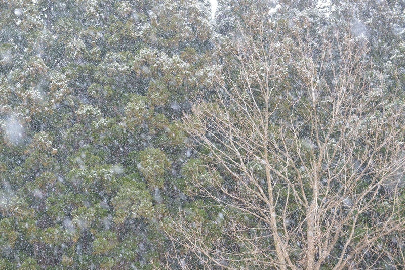 雪が降る-4