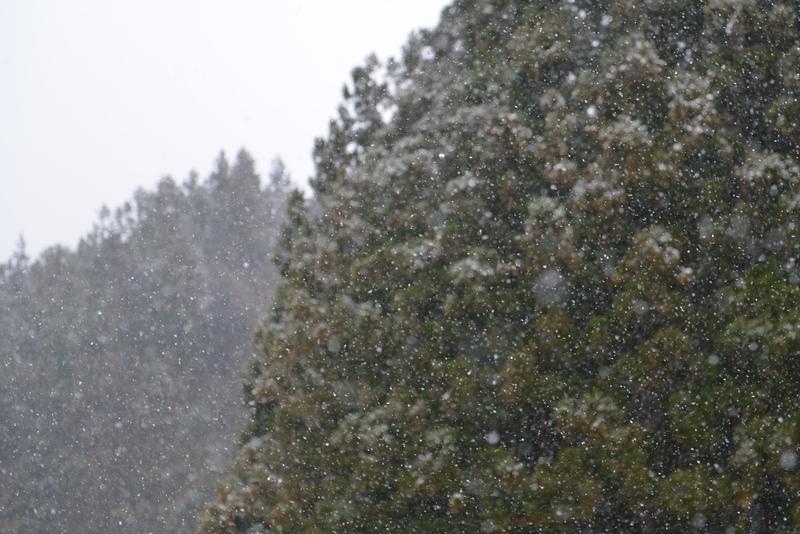 雪が降る-5