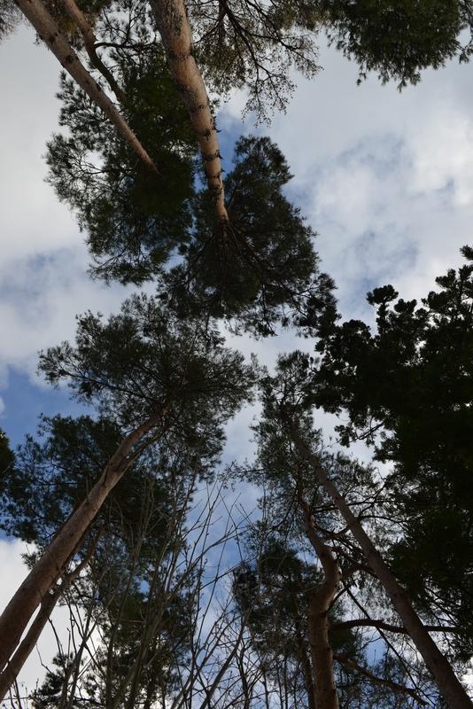 見上げて樹-2