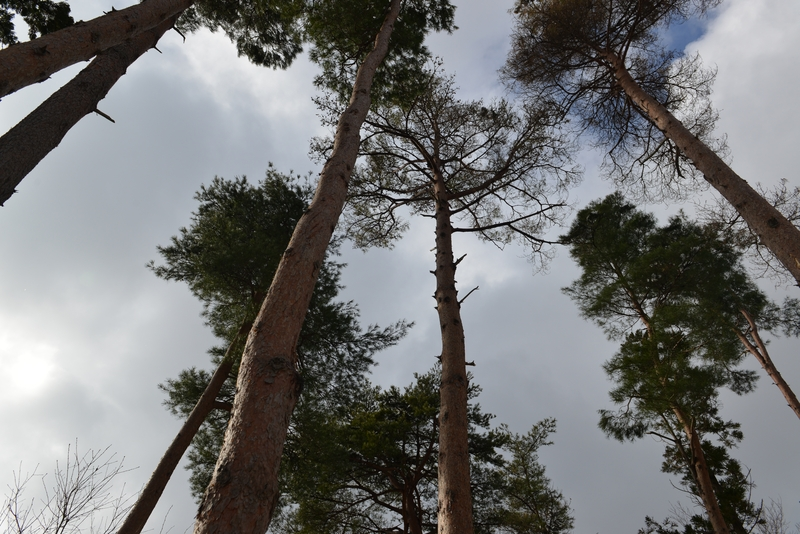 見上げて樹-1