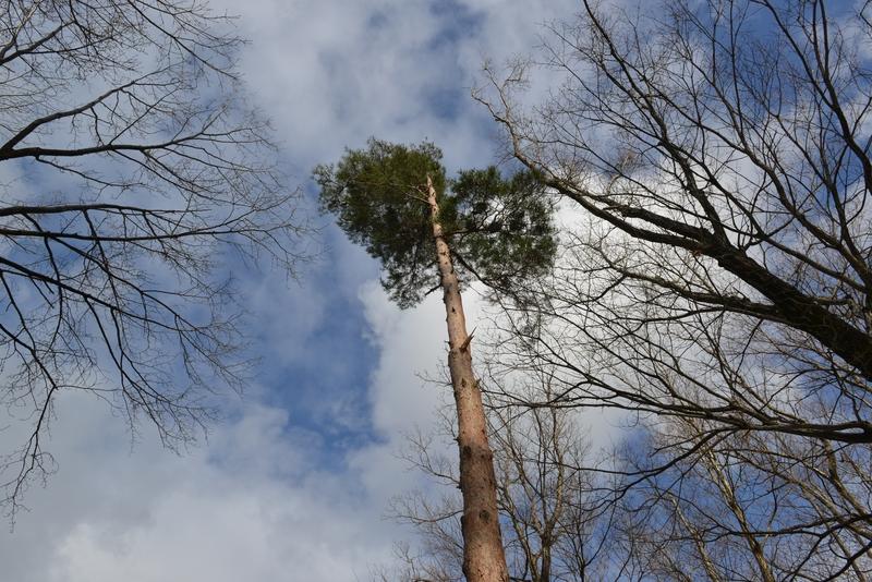 見上げて樹-3