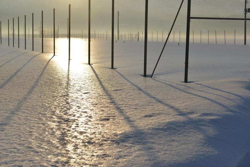 光る雪原 ポール-1