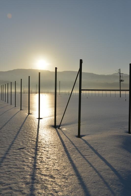 光る雪原 ポール-2