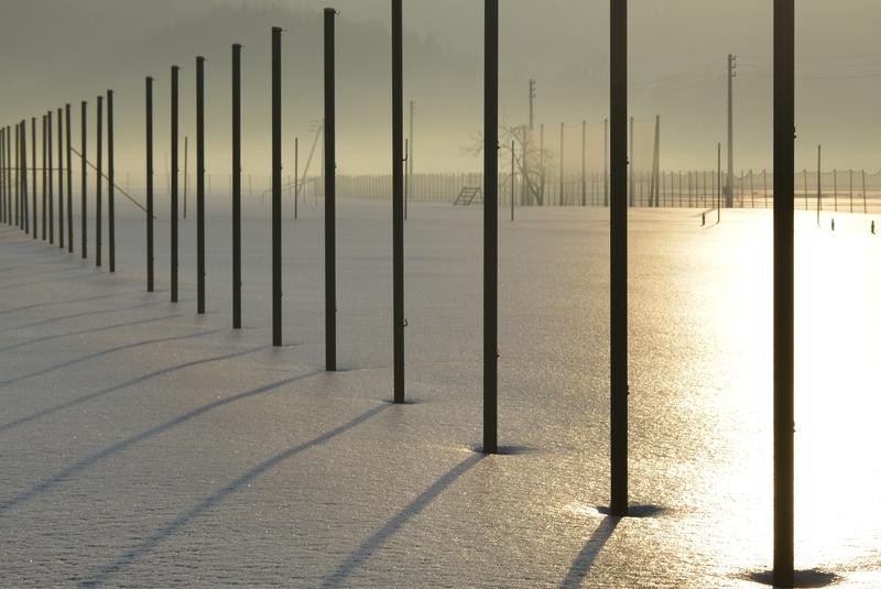 光る雪原 ポール-4