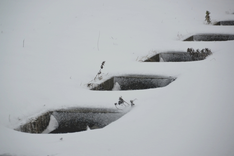 今日も雪-1