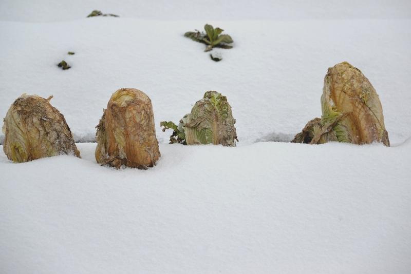 今日も雪-2