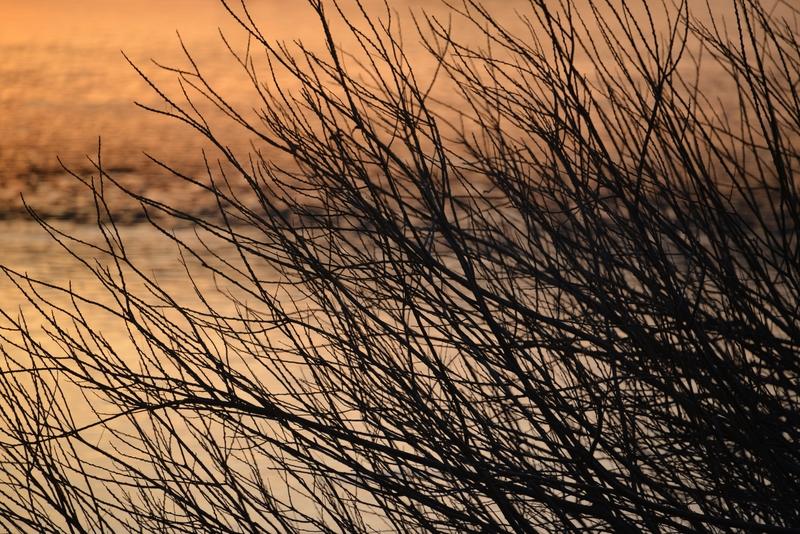 木と川と夕陽-5