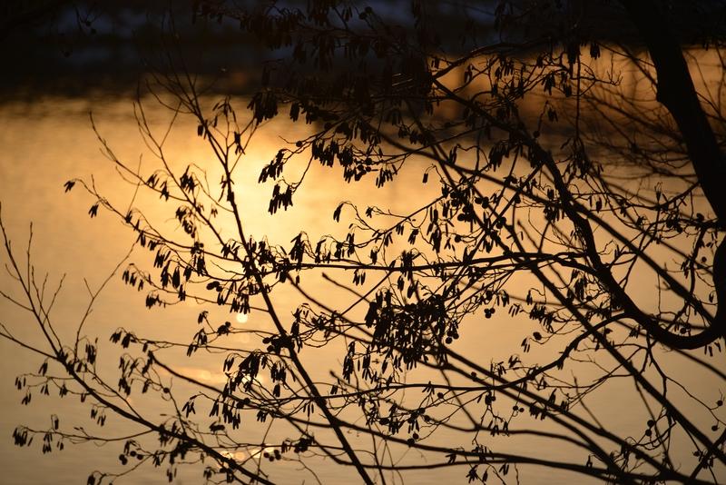 木と川と夕陽-6