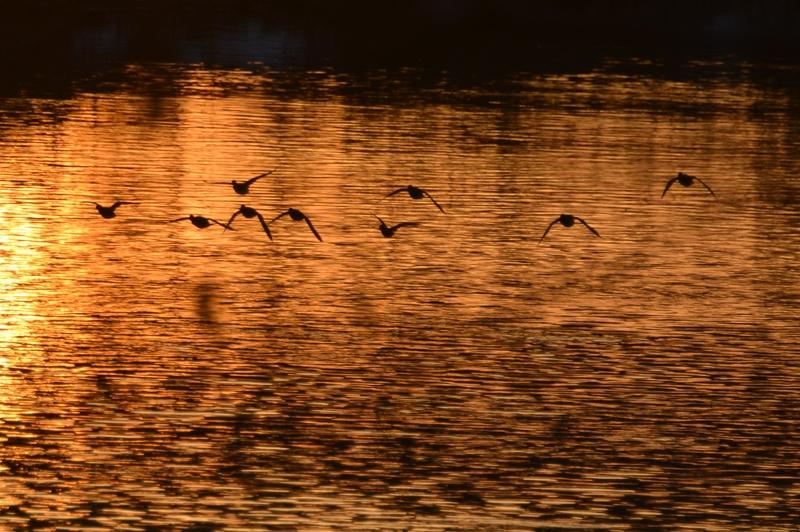 夕暮れ時の川面-1