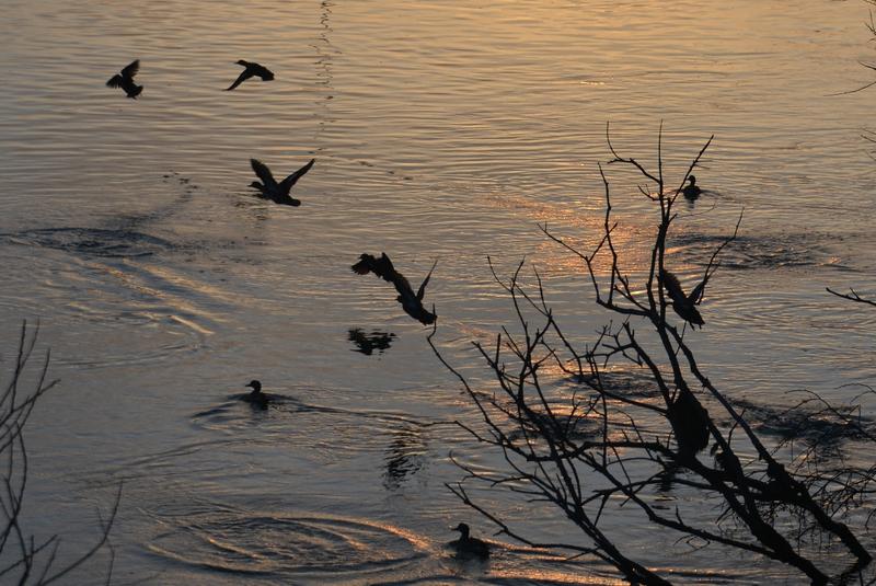 夕暮れ時の川面-2
